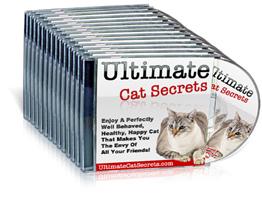 Cat Diabetes Amp Cat Care Managing Cat Diabetes And Feline